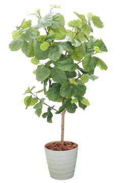 高さ1.5m以上の観葉植物レンタル(大鉢)