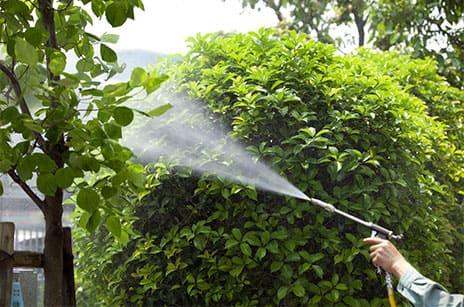樹木や草花の害虫対策のための薬剤散布