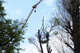 高所作業車による伐採作業