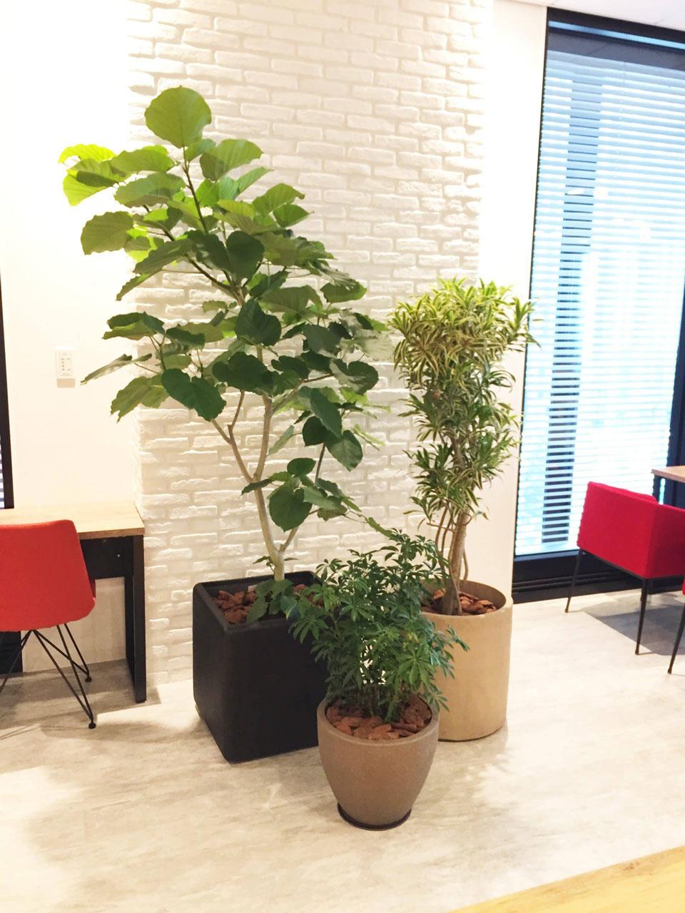 オフィス緑化 | 株式会社西花園導入実績