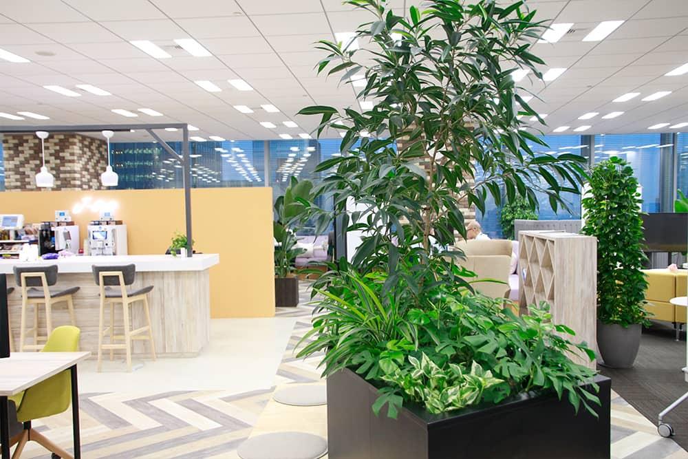 西花園の観葉植物レンタル
