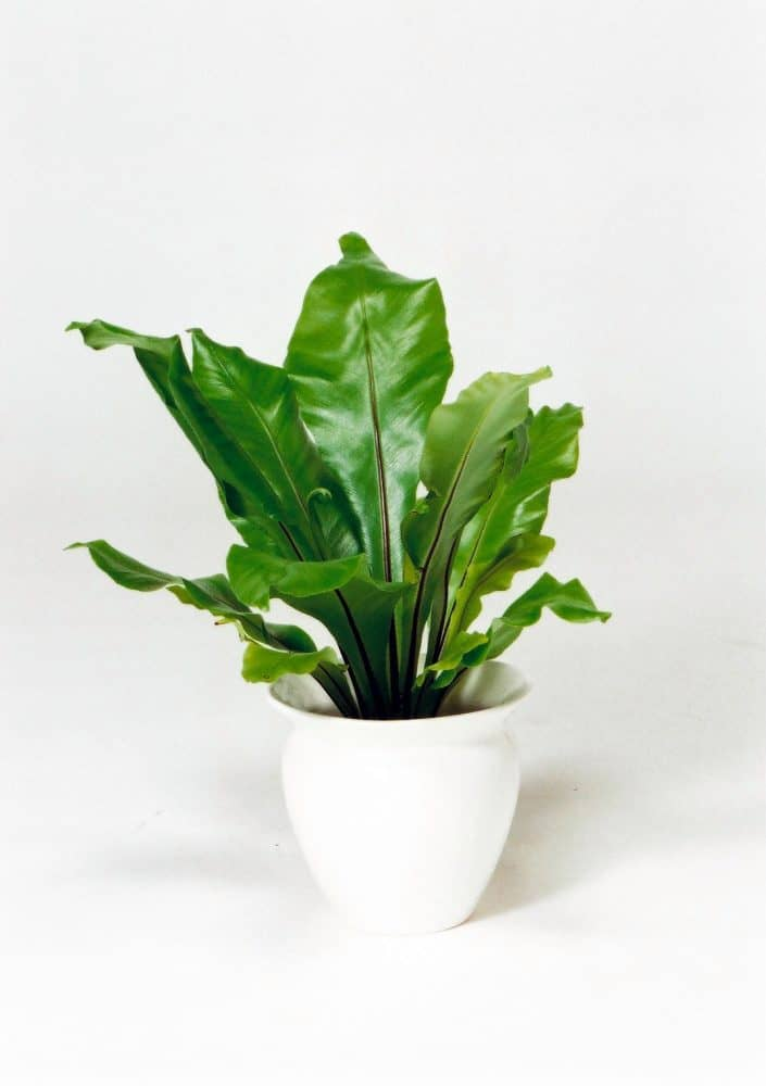 観葉植物のアビス