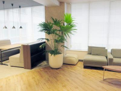 東京都情報通信会社様のオフィス緑化-植物レンタルの事例