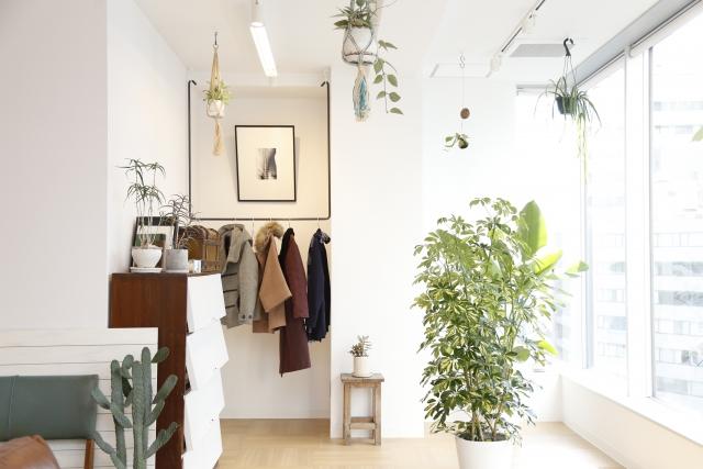 部屋に飾られているたくさんの観葉植物