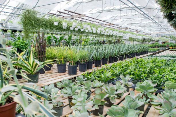 温室にあるたくさんの観葉植物