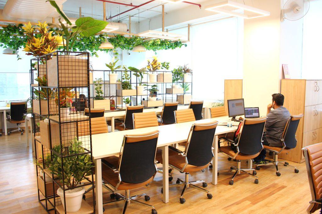 シェアオフィスに飾られた観葉植物