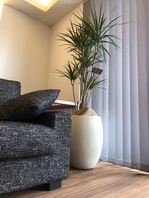 ソファーの横にある観葉植物