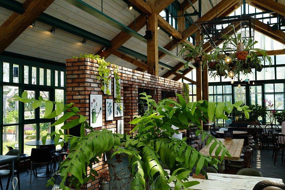 カフェにあるたくさんの観葉植物