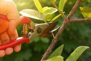 植物の枝の剪定
