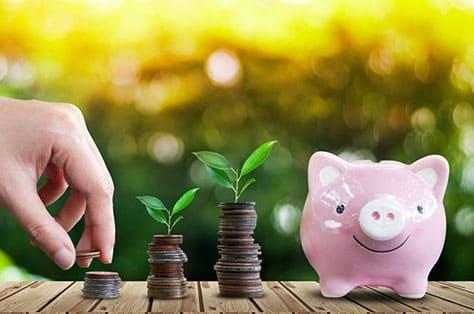 お金と植物