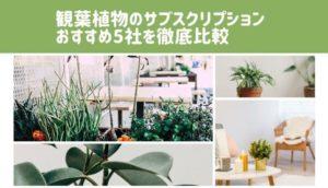 観葉植物のサブスクリプション